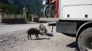 ..Schwein gehabt