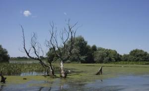 im Donaudelta