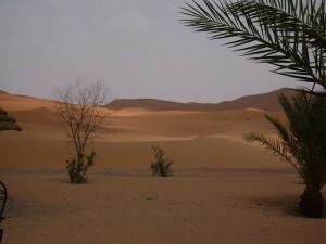 die Wüste vor der Haustür