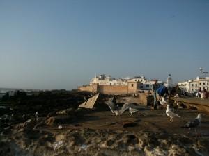 Blick auf die Medina vom Hafen